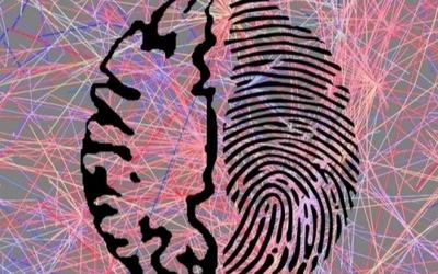"""陳根:開發新技術,高效識別大腦""""指紋"""""""